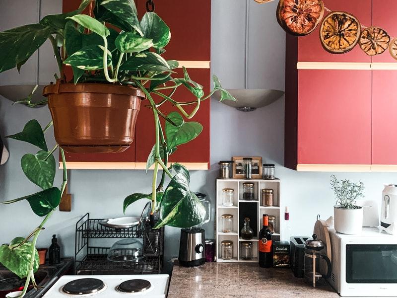 κουζίνα με κόκκινα ντουλάπια και δέντρα